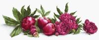 BA2357  Пионы и красные яблоки. Набор для вышивки крестом